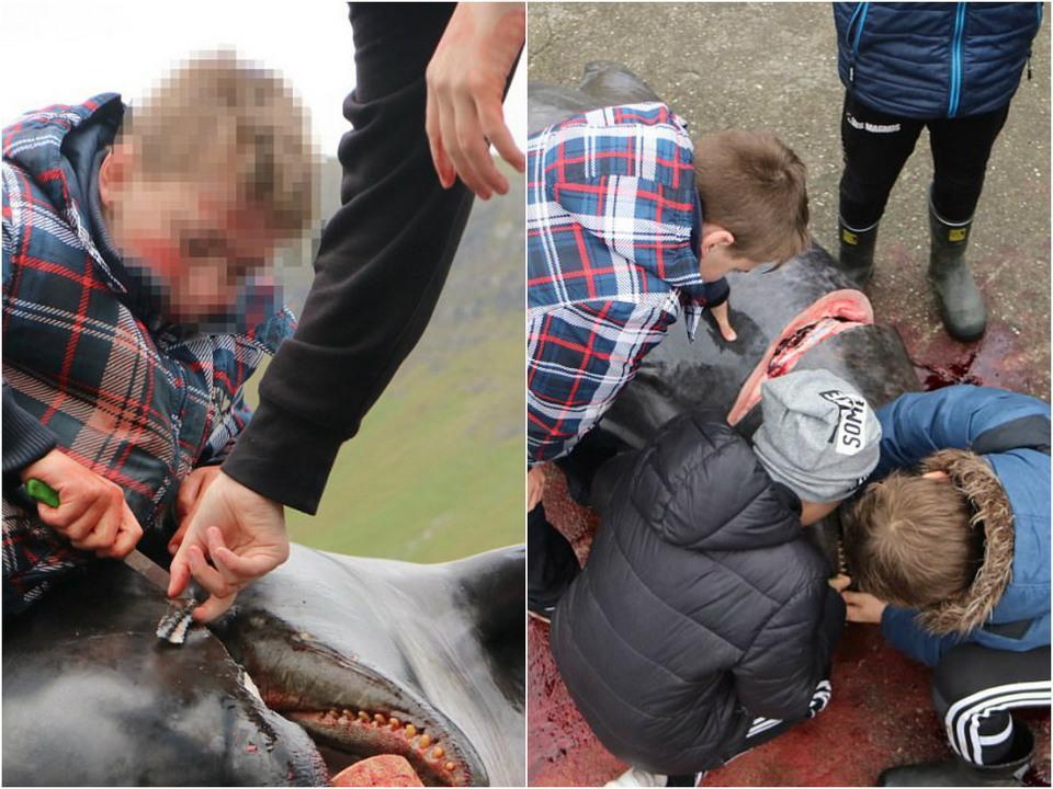 Море крови: массовый забой китов и дельфинов на Фарерских островах