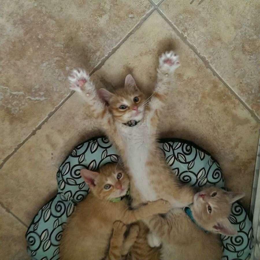 Картинки для поднятия настроения коты