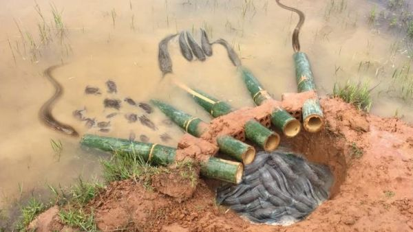 Ловушка из бамбука для ловли рыбы и крабов