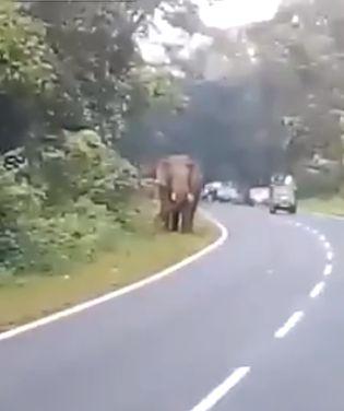 Слон убил туриста из-за селфи
