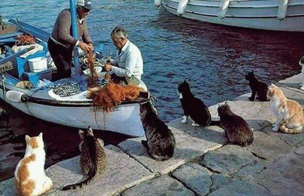 Рыбацкие приколы