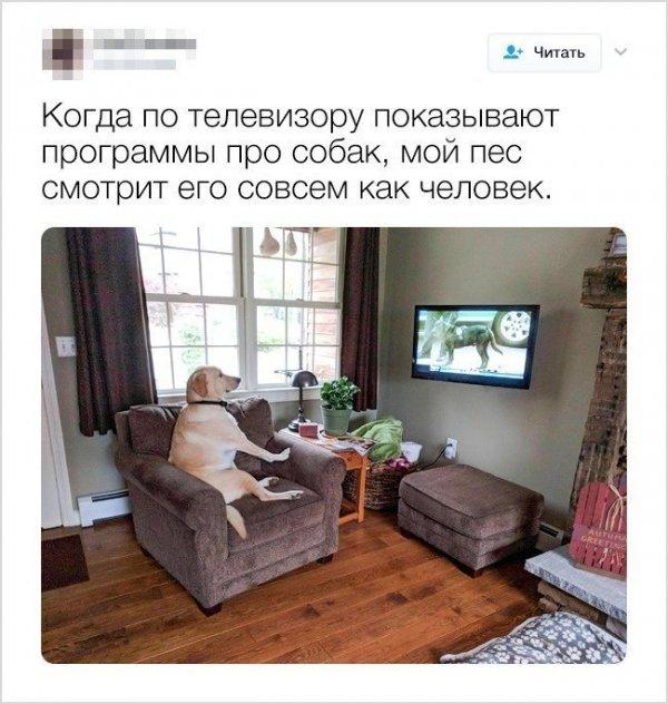 15 уморительных твитов от людей, у которых дома есть пушистые любимцы