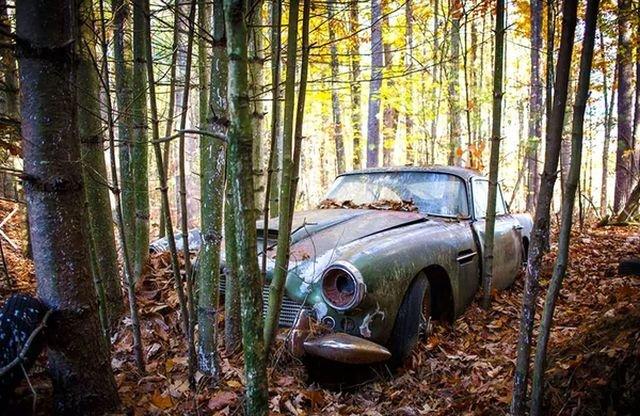 Находка в лесу ценной в 250 000 долларов