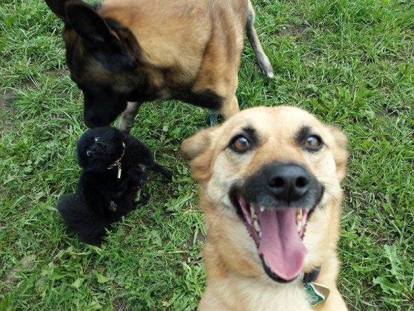 Лучшие собачьи селфи для поднятия настроения