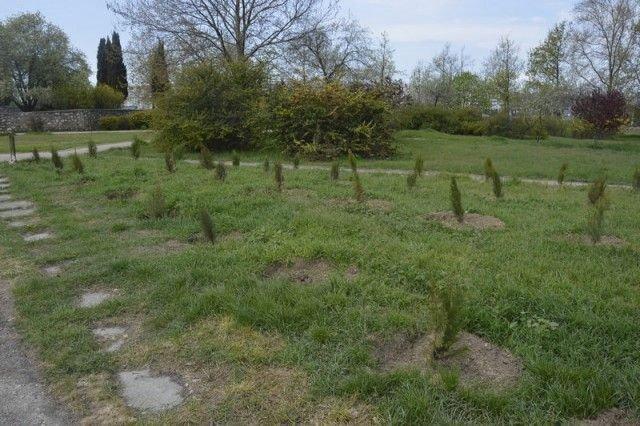 В Севастополе похитили деревья с аллеи в память о жертвах пожара в Кемерово