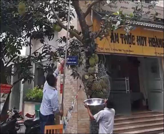 Два вьетнамца снимают джекфрут