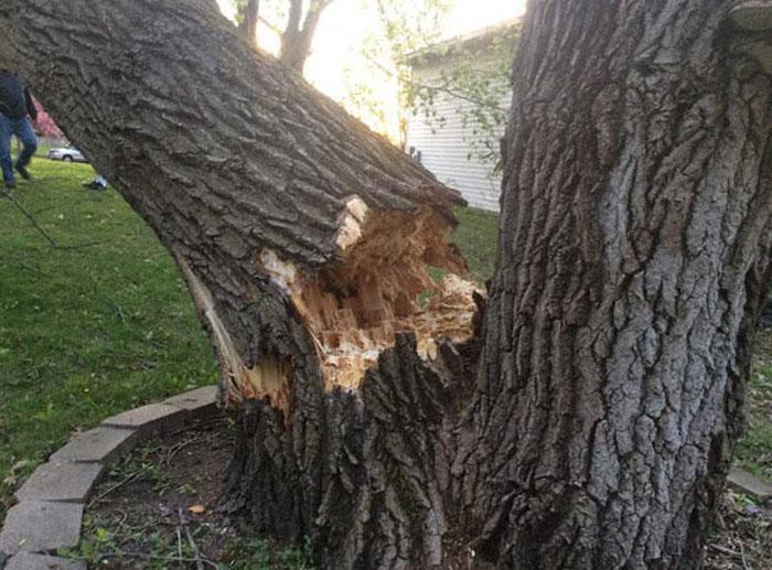 Последствия падения дерева на дом