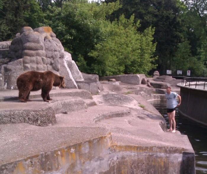 В Варшаве пьяный «мужчина» избил медведицу