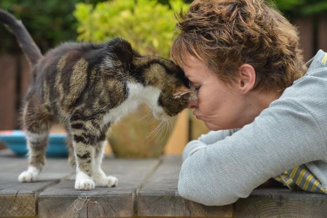 Кошка вернулась домой спустя 13 лет