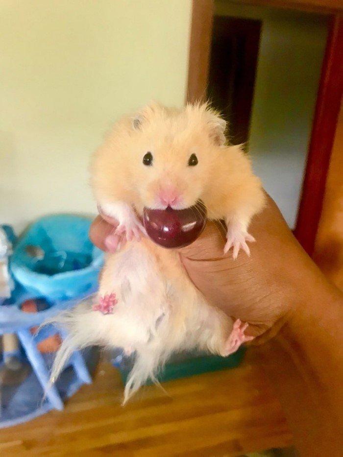 28 смешных животных, которых застукали на месте преступления