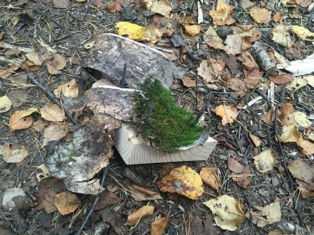 Будьте бдительны, гуляя по лесу