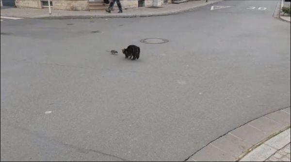Кот и крыса