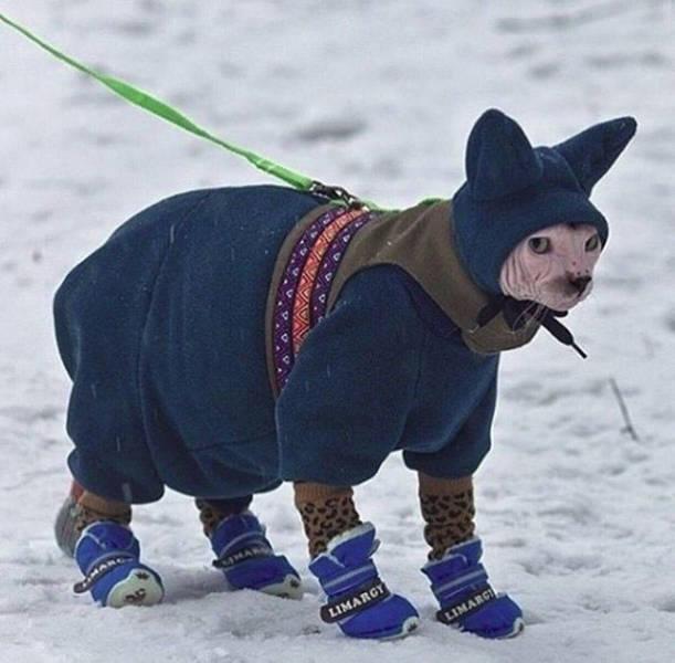 Зима уже пришла