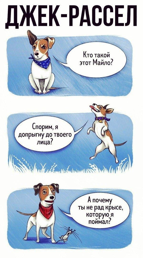 Что расскажут разные породы собак о себе