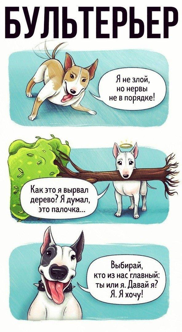 Что расскажут разные породы собак о себе юмор