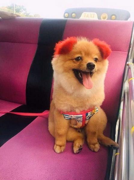 Гламурная хозяйка покрасила собаку в розовый цвет, и у той отвалилось ухо