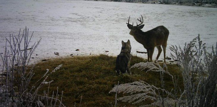 Необычная дружба попала в объектив лесной фотоловушки