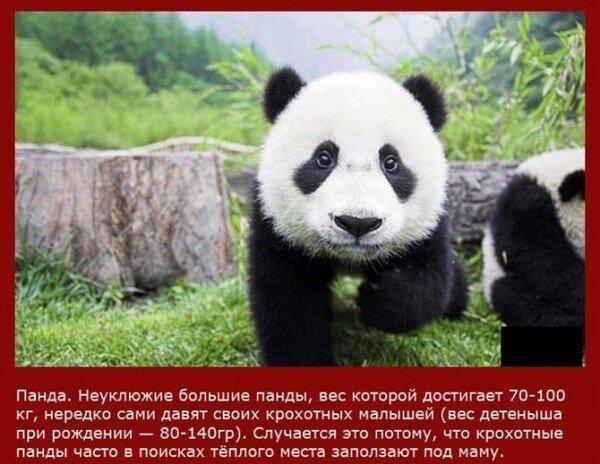 Самые непутевые мамаши в мире животных Всячина