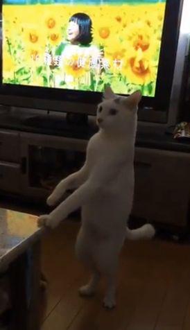 А можно мне другого кота?