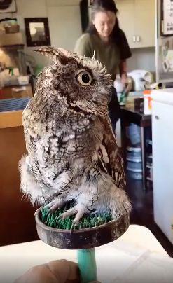 Удивительная стабилизация у совы