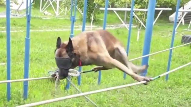 Какая ловкая собака