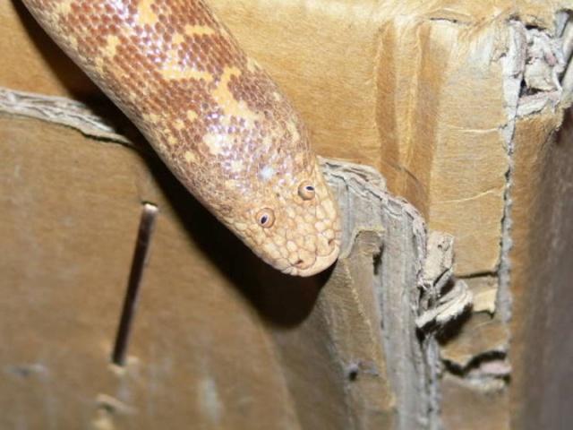 Самая забавная змея Всячина