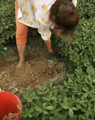 А вы думали, что арахис растет на деревьях?