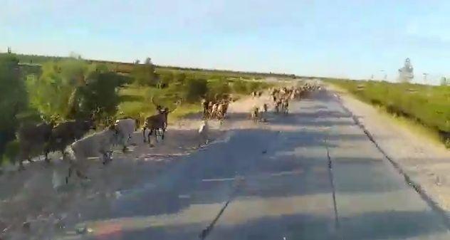 Немного дикой природы Ямала