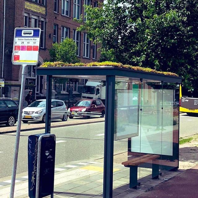 Как автобусные остановки в Нидерландах помогают спасти пчел