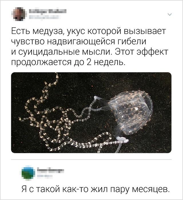 Подборка колких комментариев от пользователей соцсетей Юмор