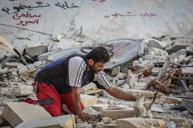 Сириец отказался от эвакуации, чтобы спасти брошенных кошек Всячина