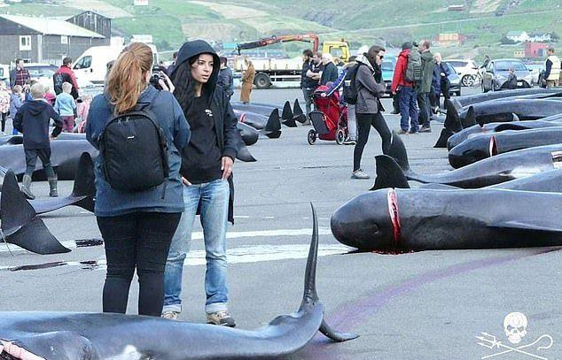 Кровавая баня на Фарерских островах: за 12 минут зарезали почти 100 китов