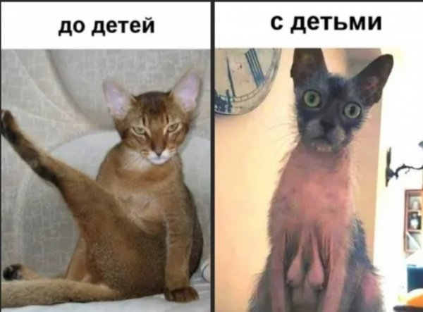 1573898924_korzik_net_2019-11-16-00-01-3