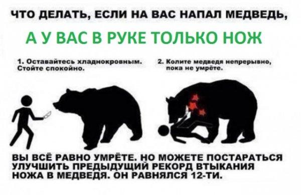 Если на вас напал медведь