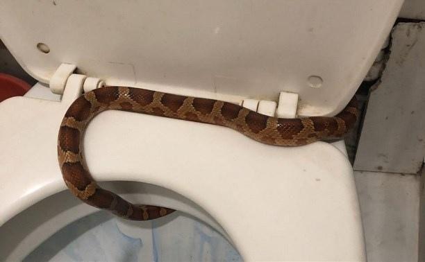 В Туле ловят змею, путешествующую по канализации