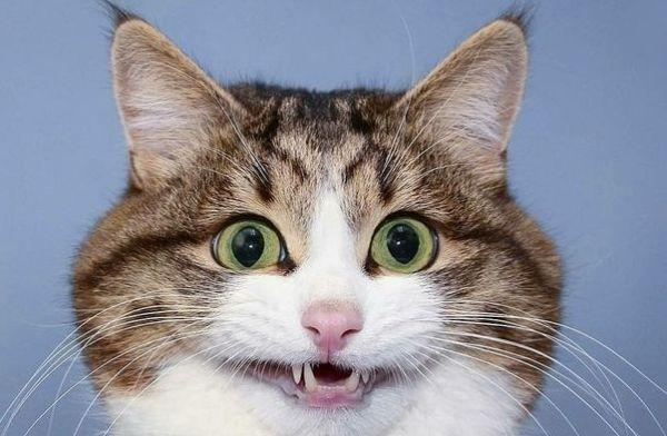 Смешной анекдот про котов