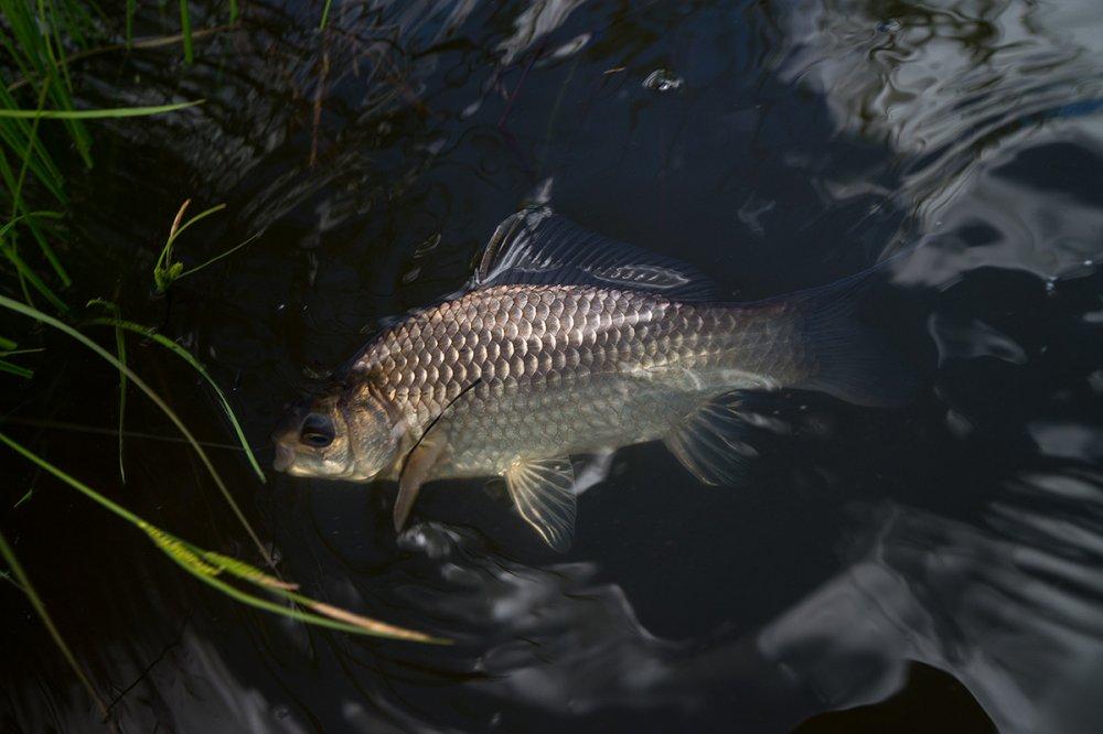 Природа и рыбалка. Релакса пост... Юмор