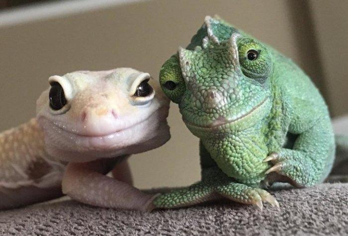 Забавные животные, от которых веет теплом и уютом Юмор