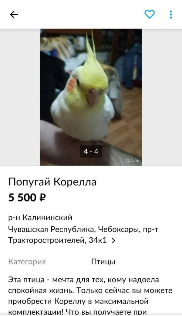 Попугай в максимальной комплектации Юмор