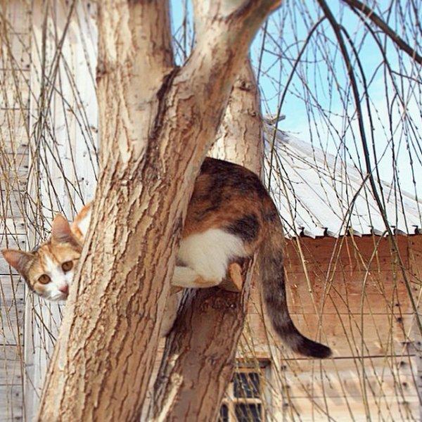 Деревенские котейки Всячина