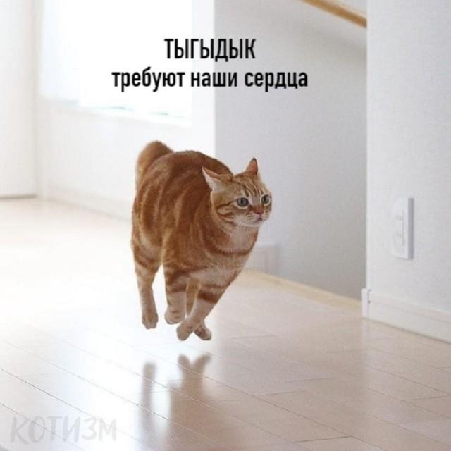 Цой по кошачьи