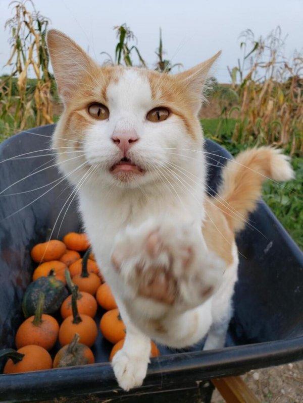 Котейки Всячина