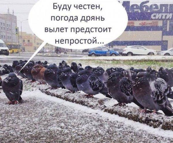 40 фактов о погоде России Всячина
