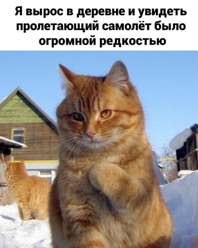 Деревенский vs городской