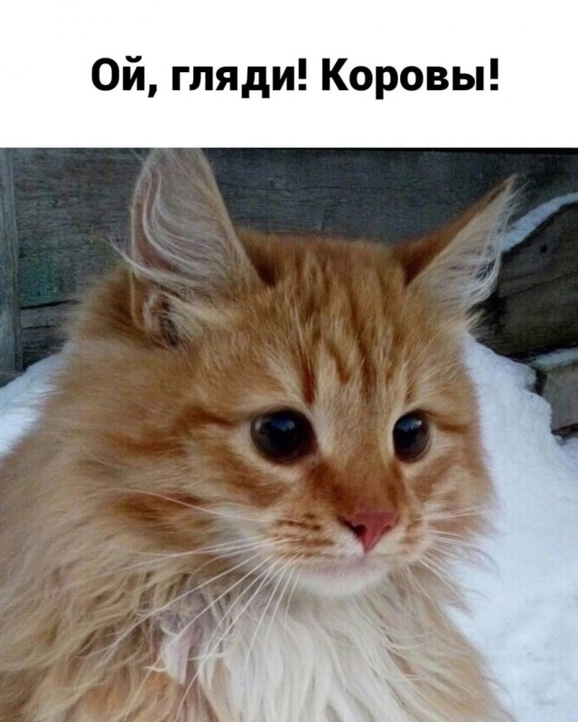 Деревенский vs городской Всячина